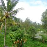 Ubud land sale