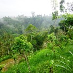 Ubud land for sale in Ubud