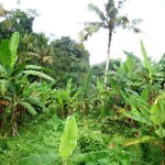 Land forsale in Ubud Bali