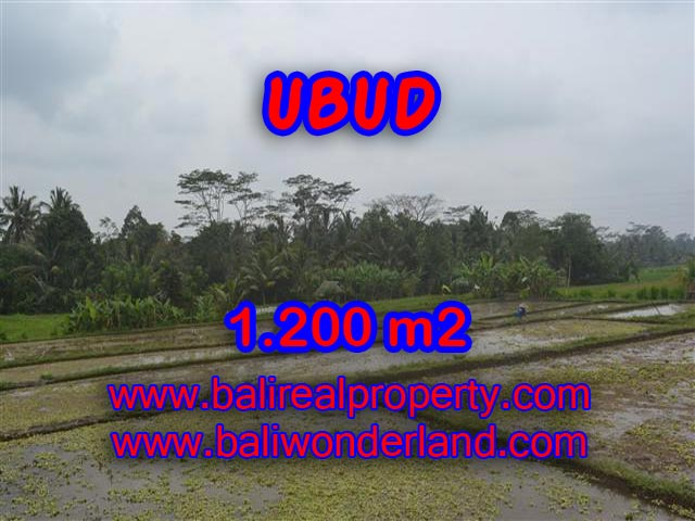 Extraordinary Land for sale in Ubud Bali, rice fields view in Ubud Payangan– TJUB360