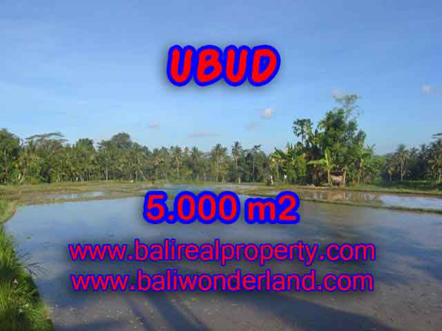 Interesting Land for sale in Ubud Bali, Mountain and ricefields view in Ubud Payangan– TJUB413