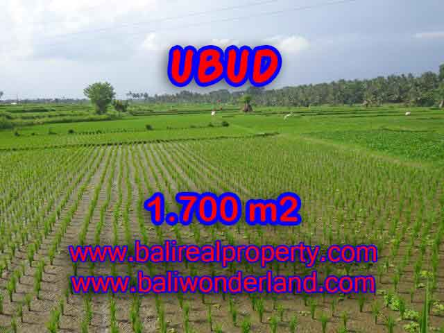 Magnificent Property for sale in Bali, land for sale in Ubud Bali – TJUB398