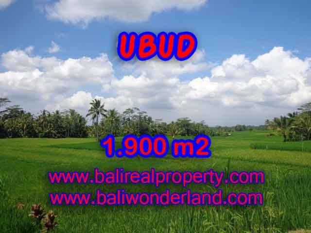 Fantastic Land for sale in Ubud Bali, ricefields and mountain view in Ubud Payangan– TJUB403