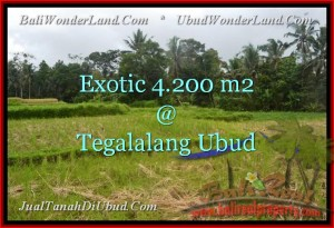 Beautiful PROPERTY 4,200 m2 LAND FOR SALE IN Ubud Tegalalang TJUB461