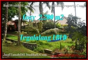 Beautiful 2,200 m2 LAND IN UBUD BALI FOR SALE TJUB462