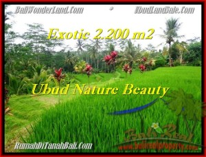 Magnificent PROPERTY LAND SALE IN Ubud Tegalalang BALI TJUB480