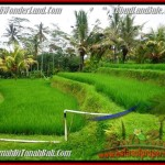 Magnificent PROPERTY LAND IN UBUD FOR SALE TJUB480