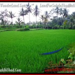FOR SALE 3,200 m2 LAND IN UBUD TJUB484