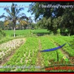 Magnificent 600 m2 LAND FOR SALE IN UBUD TJUB452
