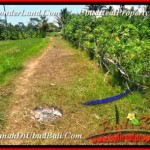 Affordable 800 m2 LAND IN UBUD FOR SALE TJUB457