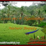 Magnificent UBUD BALI 2,000 m2 LAND FOR SALE TJUB490