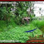 Magnificent PROPERTY 2,000 m2 LAND IN Ubud Tegalalang FOR SALE TJUB490