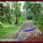 Beautiful 2,000 m2 LAND SALE IN UBUD BALI TJUB490