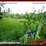 FOR SALE Affordable PROPERTY 2,000 m2 LAND IN UBUD BALI TJUB490