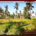 Exotic PROPERTY 1,000 m2 LAND SALE IN UBUD BALI TJUB434