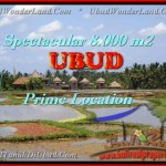 Beautiful 8.000 m2 LAND FOR SALE IN UBUD BALI TJUB441