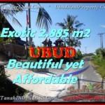 Beautiful 2.885 m2 LAND FOR SALE IN UBUD BALI TJUB442