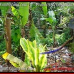 Exotic LAND SALE IN Sentral Ubud BALI TJUB415