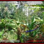 FOR SALE Magnificent LAND IN Sentral Ubud BALI TJUB415