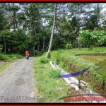 Beautiful PROPERTY 2,600 m2 LAND IN Ubud Tegalalang FOR SALE TJUB421