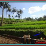 Affordable PROPERTY 570 m2 LAND FOR SALE IN UBUD TJUB511