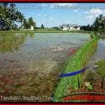 Beautiful PROPERTY Sentral Ubud 4,200 m2 LAND FOR SALE TJUB502