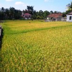 Affordable 1,500 m2 LAND IN UBUD BALI FOR SALE TJUB508