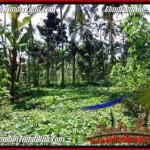 Exotic UBUD BALI 2,000 m2 LAND FOR SALE TJUB506