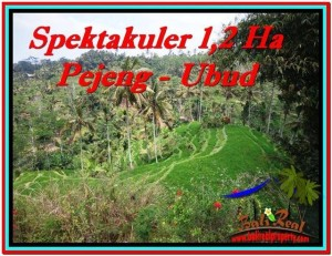 FOR SALE Exotic 12,000 m2 LAND IN UBUD TJUB520