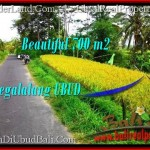 Affordable LAND SALE IN Ubud Tegalalang BALI TJUB497