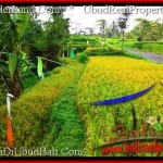 Magnificent PROPERTY LAND SALE IN UBUD TJUB497
