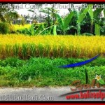 Exotic PROPERTY UBUD LAND FOR SALE TJUB497