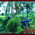 Affordable PROPERTY LAND IN UBUD FOR SALE TJUB497