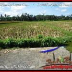 Affordable LAND SALE IN Ubud Pejeng BALI TJUB498