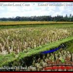 Affordable PROPERTY LAND IN UBUD FOR SALE TJUB498