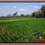 LAND SALE IN Ubud Tegalalang BALI TJUB518