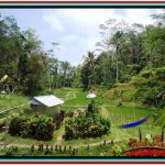 FOR SALE Affordable LAND IN Ubud Tampak Siring BALI TJUB519