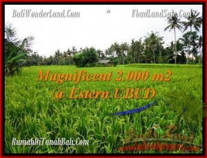 Affordable PROPERTY 2,000 m2 LAND FOR SALE IN Ubud Pejeng TJUB485