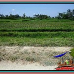 Beautiful 2,000 m2 LAND FOR SALE IN Ubud Tegalalang TJUB529