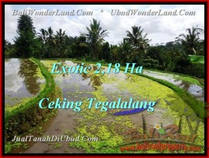 Exotic 21,800 m2 LAND FOR SALE IN UBUD BALI TJUB471