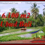 FOR SALE Magnificent 6,100 m2 LAND IN UBUD BALI TJUB552