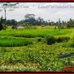 Magnificent PROPERTY 3,583 m2 LAND FOR SALE IN Ubud Pejeng BALI TJUB542