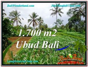 Exotic LAND SALE IN Ubud Payangan BALI TJUB560