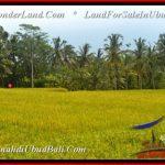 Beautiful UBUD LAND FOR SALE TJUB540