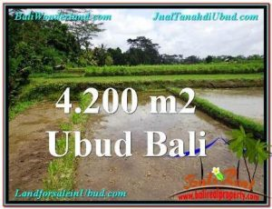 FOR SALE 4,200 m2 LAND IN UBUD TJUB561