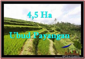 Affordable PROPERTY 45,000 m2 LAND IN Ubud Payangan FOR SALE TJUB533