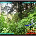 Beautiful UBUD LAND FOR SALE TJUB573