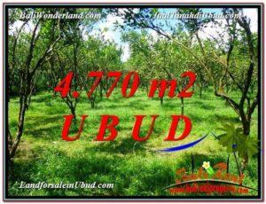 UBUD 4,770 m2 LAND FOR SALE TJUB598