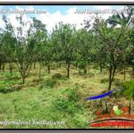 FOR SALE Exotic 3,600 m2 LAND IN UBUD BALI TJUB599