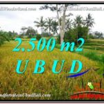 Magnificent PROPERTY 2,500 m2 LAND SALE IN Ubud Pejeng TJUB577
